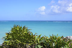 加勒比海海滩在蓝天下在Tulum,尤卡坦半岛,墨西哥,绿色热带植物前景,文本拷贝空间 免版税库存图片