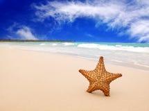 加勒比海滩和大海星 库存照片