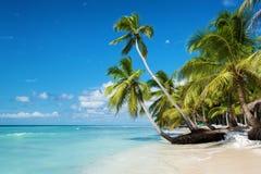 加勒比海滩在Saona海岛,多米尼加共和国 库存照片