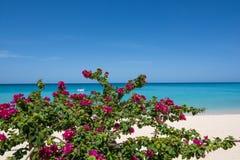 加勒比海滩巴巴多斯 库存图片