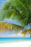加勒比海滩,圣克鲁瓦, USVI 免版税图库摄影