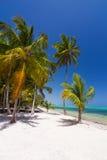 加勒比狂放的自然风景 免版税库存照片