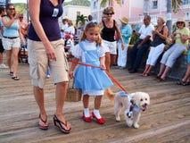 加勒比狗游行 免版税库存照片