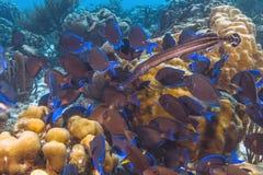 加勒比珊瑚礁 库存照片