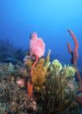 加勒比礁石 免版税库存图片