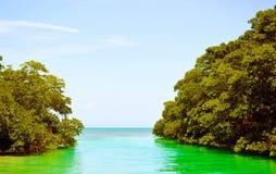 加勒比野生生物-天堂地方 库存图片