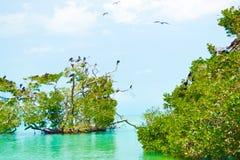 加勒比野生生物-天堂地方 免版税库存照片