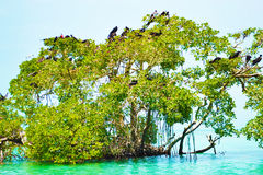 加勒比野生生物-天堂地方 库存照片