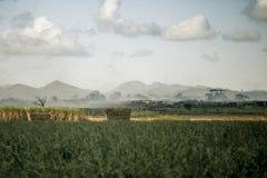 加勒比领域 免版税库存图片
