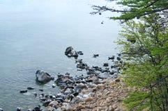 贝加尔湖封印nerpa 库存图片