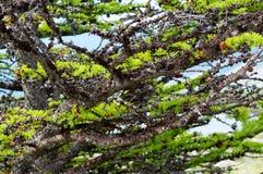 贝加尔湖湖 岸上树在春天 免版税库存图片