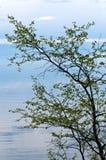 贝加尔湖湖 岸上树在春天 库存照片