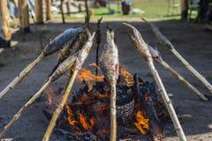贝加尔湖omul在煤炭被烤 免版税库存照片