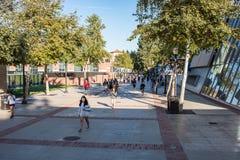 加州大学洛杉矶分校校园 免版税库存图片