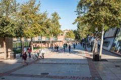 加州大学洛杉矶分校校园 图库摄影