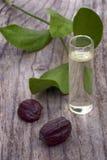 加州希蒙得木(中华的Simmondsia)叶子、种子和油 免版税库存照片
