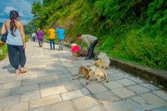 加德满都,尼泊尔, 2017年11月02日:接触野山羊的未认出的人民参加在一条扔石头的道路,在室外  库存图片