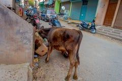 加德满都,尼泊尔- 2016年10月25日, :威胁寻找在纸板箱里面的食物在路的街道 免版税库存照片