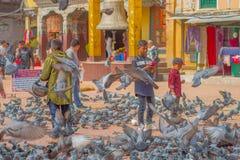 加德满都,尼泊尔2017年10月15日:走在正方形围拢的未认出的人民一百在前面的鸽子 库存图片