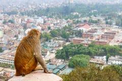 加德满都都市风景和恒河猴 图库摄影