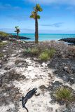 加拉帕戈斯海运视图 免版税图库摄影