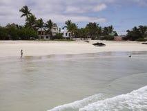 加拉帕戈斯海滩 图库摄影