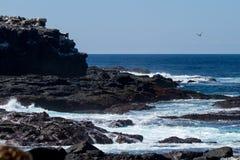 加拉帕戈斯群岛海景 图库摄影