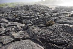 加拉帕戈斯群岛熔岩岩石 库存照片