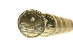 加拿大一枚美元硬币 库存照片