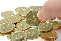加拿大一枚美元硬币 图库摄影