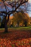 加拿大上色秋天温哥华 库存图片