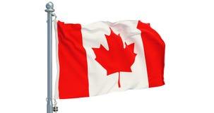 加拿大人沙文主义情绪在白色背景,动画 3d翻译 皇族释放例证