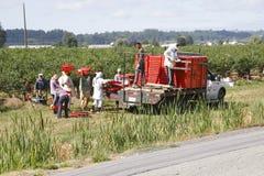 加拿大农田劳工 免版税库存照片