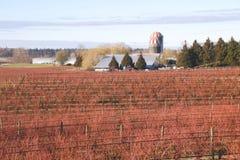 加拿大冬天莓果农场 库存照片