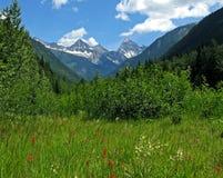 加拿大冰川公园远景 免版税库存照片