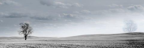 加拿大大草原麦田 库存图片