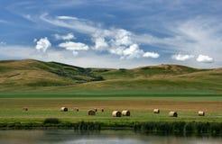加拿大大草原 免版税图库摄影
