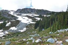 加拿大山吹口哨 免版税图库摄影