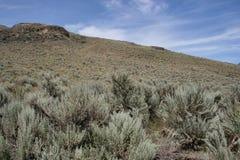 加拿大干草原 免版税图库摄影