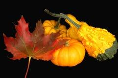 加拿大感恩 免版税库存照片