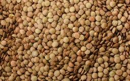 加拿大扁豆绿化大作为背景 库存照片