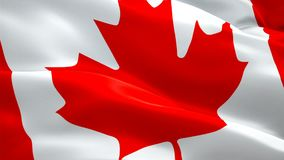 加拿大挥动在风的旗子录影 现实加拿大旗子背景 红色枫叶旗子特写镜头1080p HD录影 渥太华1080p Ful 库存例证