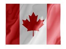 加拿大振翼 库存图片