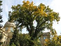 加拿大旗子在立法地面的虽则被看见的树 免版税库存照片