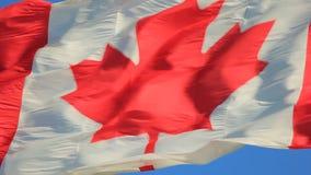加拿大标志国民 股票视频
