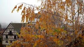 加拿大桦,在树冰的叶子,第一霜,容易的微风 股票视频