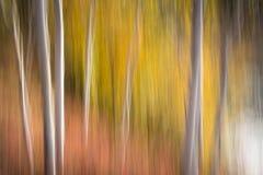 加拿大森林迷离 库存图片