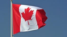 加拿大沙文主义情绪在风, 影视素材