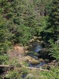 加拿大河纽芬兰 库存图片