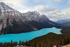 加拿大湖peyto罗基斯 免版税库存照片